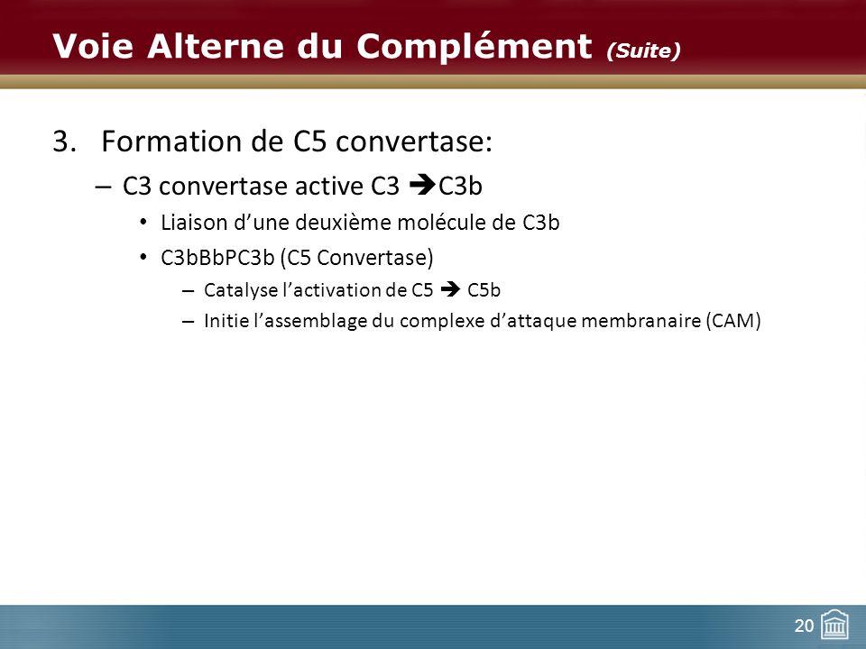 20 Voie Alterne du Complément (Suite) 3.Formation de C5 convertase: – C3 convertase active C3 C3b Liaison dune deuxième molécule de C3b C3bBbPC3b (C5
