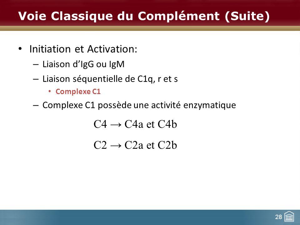 28 Voie Classique du Complément (Suite) Initiation et Activation: – Liaison dIgG ou IgM – Liaison séquentielle de C1q, r et s Complexe C1 – Complexe C