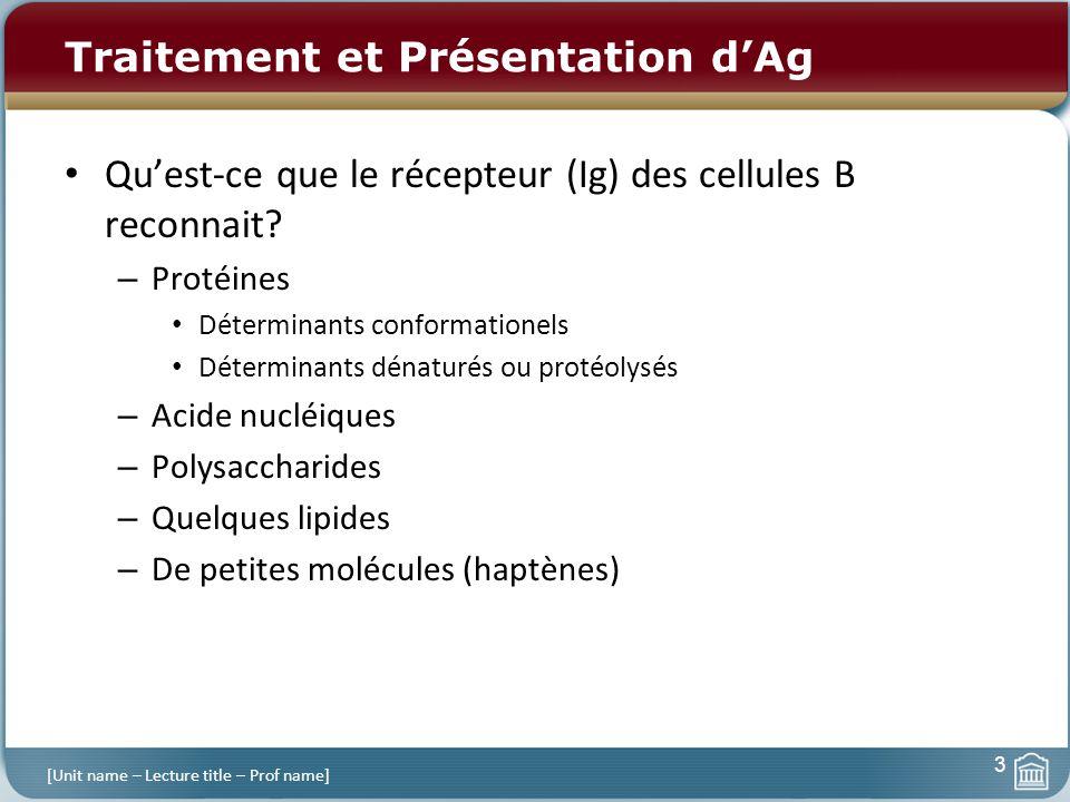 Traitement et Présentation dAg Quest-ce que le récepteur (Ig) des cellules B reconnait? – Protéines Déterminants conformationels Déterminants dénaturé