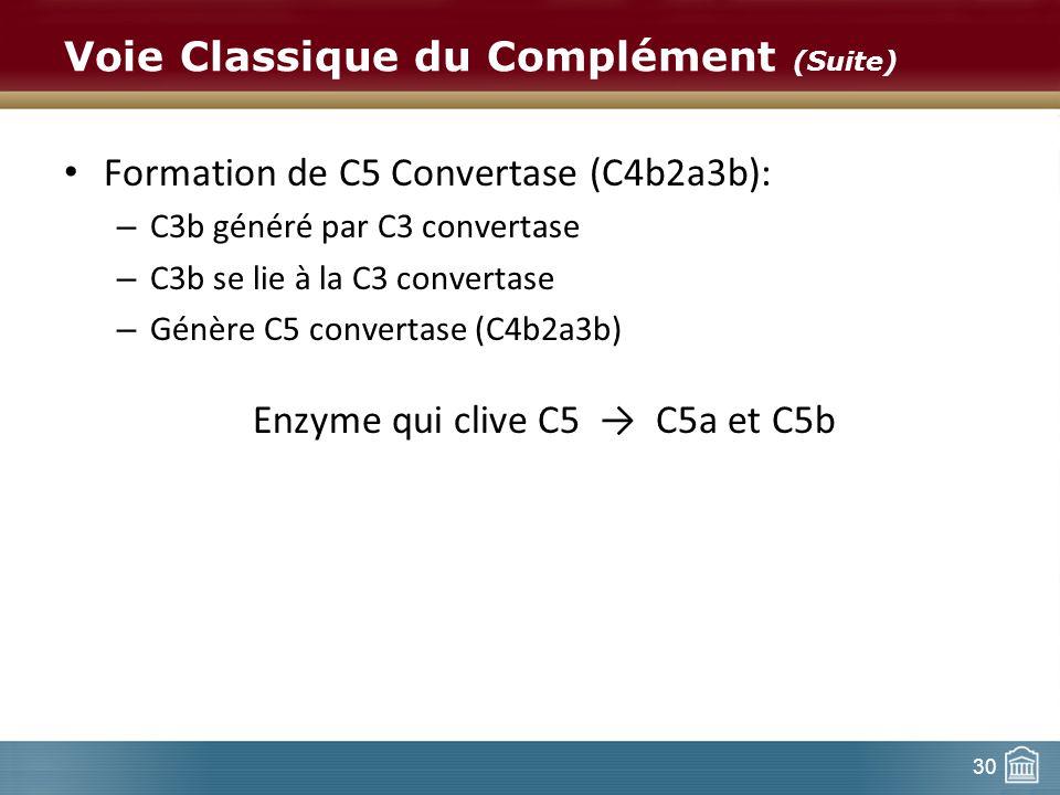 30 Voie Classique du Complément (Suite) Formation de C5 Convertase (C4b2a3b): – C3b généré par C3 convertase – C3b se lie à la C3 convertase – Génère
