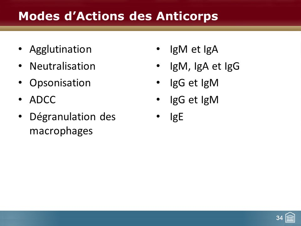 34 Modes dActions des Anticorps Agglutination Neutralisation Opsonisation ADCC Dégranulation des macrophages IgM et IgA IgM, IgA et IgG IgG et IgM IgE