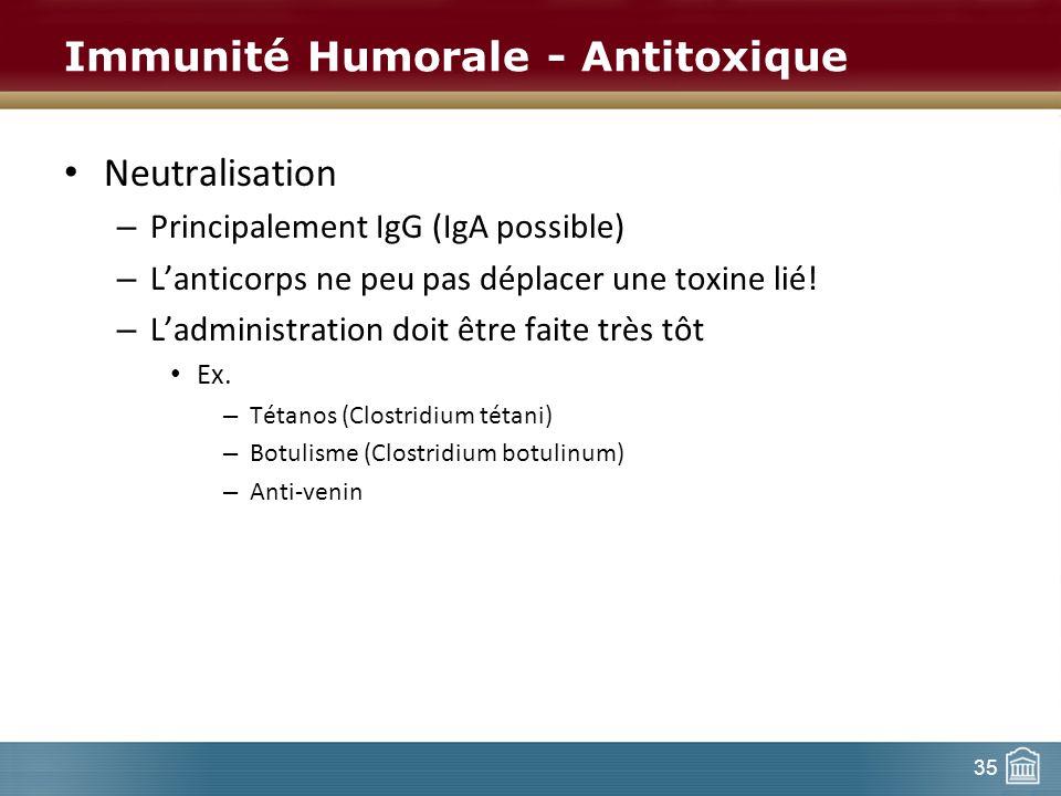 35 Immunité Humorale - Antitoxique Neutralisation – Principalement IgG (IgA possible) – Lanticorps ne peu pas déplacer une toxine lié! – Ladministrati