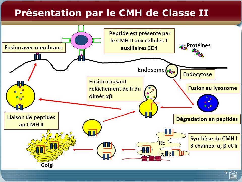 RE Endocytose Dégradation en peptides Endosome Fusion au lysosome Synthèse du CMH I 3 chaînes: α, β et Ii αβ Ii Liaison de peptides au CMH II Fusion a