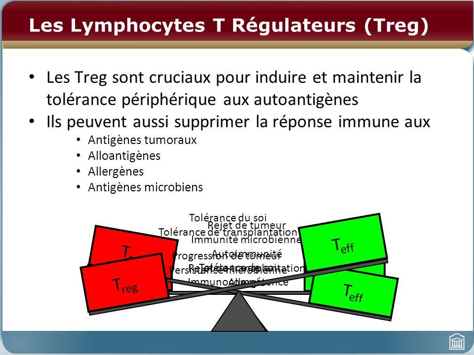 Les Lymphocytes T Régulateurs (Treg) Les Treg sont cruciaux pour induire et maintenir la tolérance périphérique aux autoantigènes Ils peuvent aussi supprimer la réponse immune aux Antigènes tumoraux Alloantigènes Allergènes Antigènes microbiens T eff T reg Tolérance de soi Immunocompétence T eff T reg Rejet de tumeur Immunité microbienne Autoimmunité Rejet de transplantation Allergie T eff T reg Tolérance du soi Tolérance de transplantation Progression de tumeur Persistance microbienne