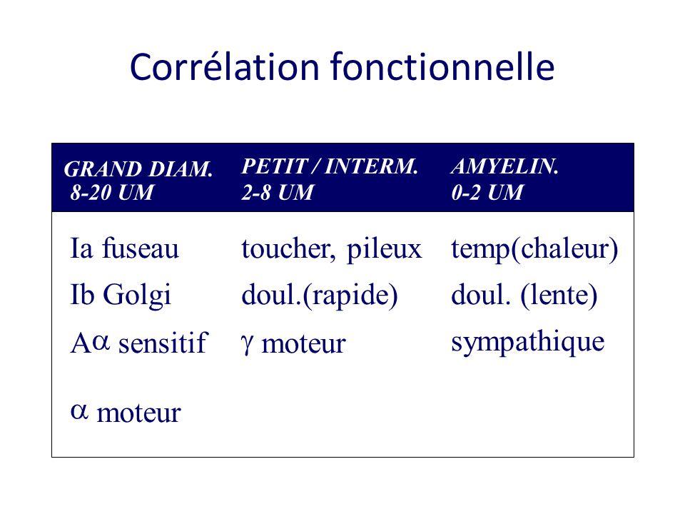 Corrélation fonctionnelle GRAND DIAM.8-20 UM PETIT / INTERM.