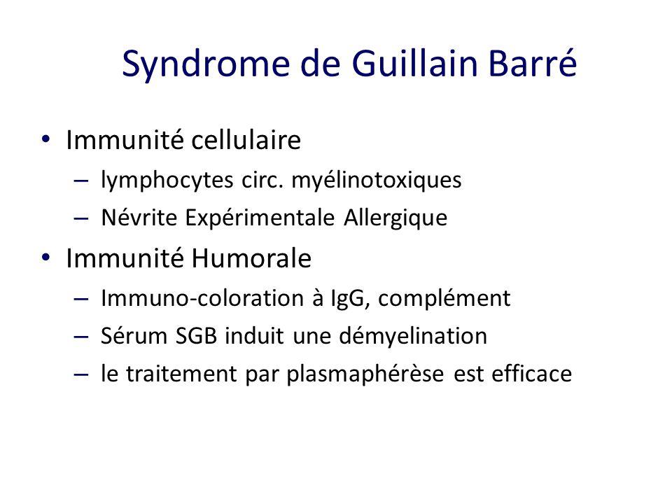 Syndrome de Guillain Barré Immunité cellulaire – lymphocytes circ.