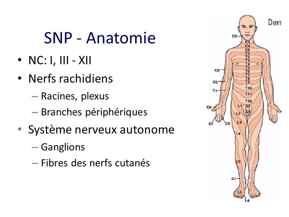 SNP - Anatomie NC: I, III - XII Nerfs rachidiens – Racines, plexus – Branches périphériques Système nerveux autonome – Ganglions – Fibres des nerfs cutanés