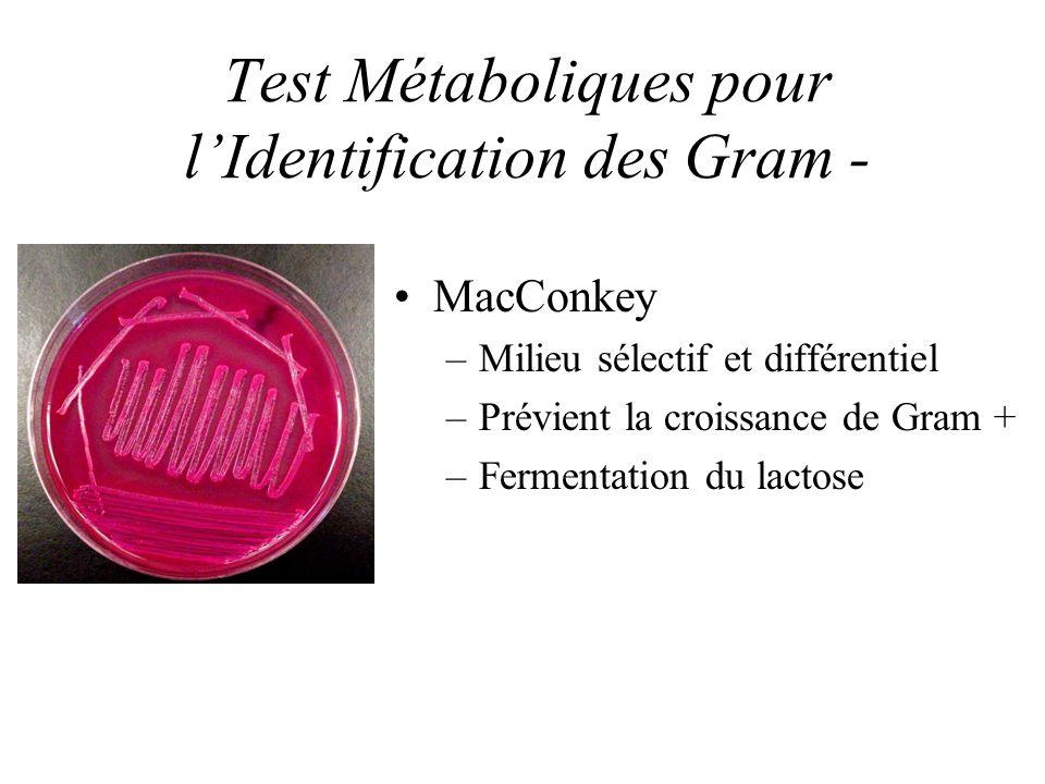 Test Métaboliques pour lIdentification des Gram - MacConkey –Milieu sélectif et différentiel –Prévient la croissance de Gram + –Fermentation du lactose