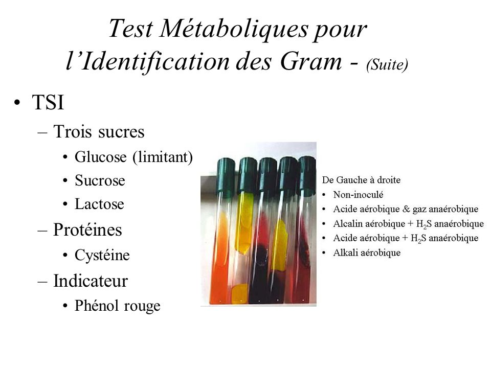 Test Métaboliques pour lIdentification des Gram - (Suite) TSI –Trois sucres Glucose (limitant) Sucrose Lactose –Protéines Cystéine –Indicateur Phénol rouge