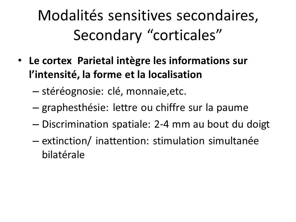 Modalités sensitives secondaires, Secondary corticales Le cortex Parietal intègre les informations sur lintensité, la forme et la localisation – stéré
