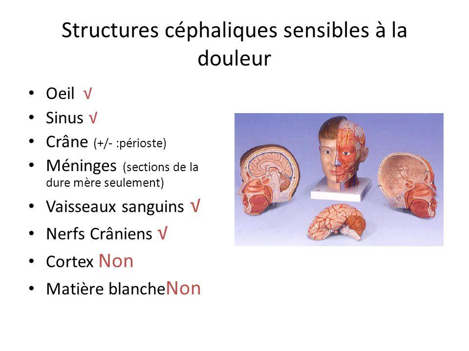 Structures céphaliques sensibles à la douleur Oeil Sinus Crâne (+/- :périoste) Méninges (sections de la dure mère seulement) Vaisseaux sanguins Nerfs
