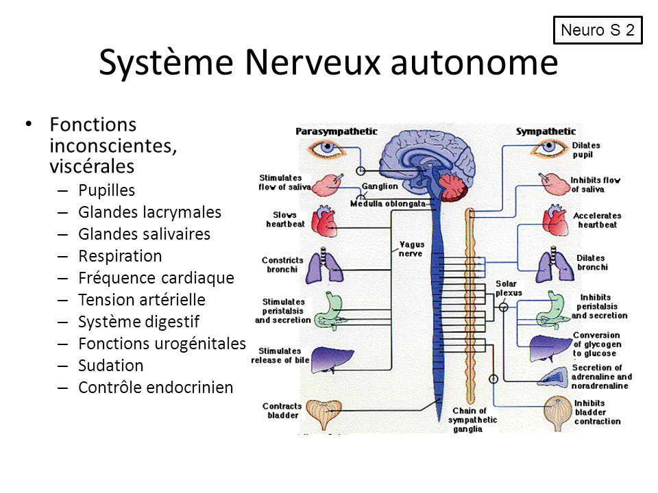 Système Nerveux autonome Fonctions inconscientes, viscérales – Pupilles – Glandes lacrymales – Glandes salivaires – Respiration – Fréquence cardiaque