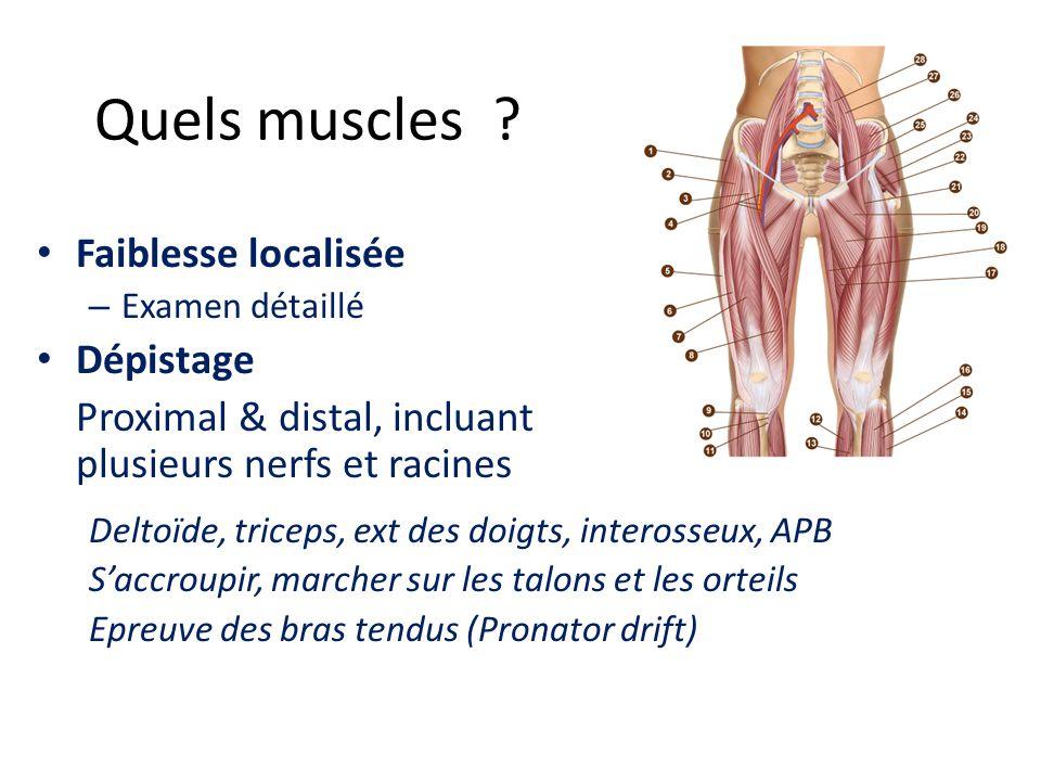 Quels muscles ? Faiblesse localisée – Examen détaillé Dépistage Proximal & distal, incluant plusieurs nerfs et racines Deltoïde, triceps, ext des doig