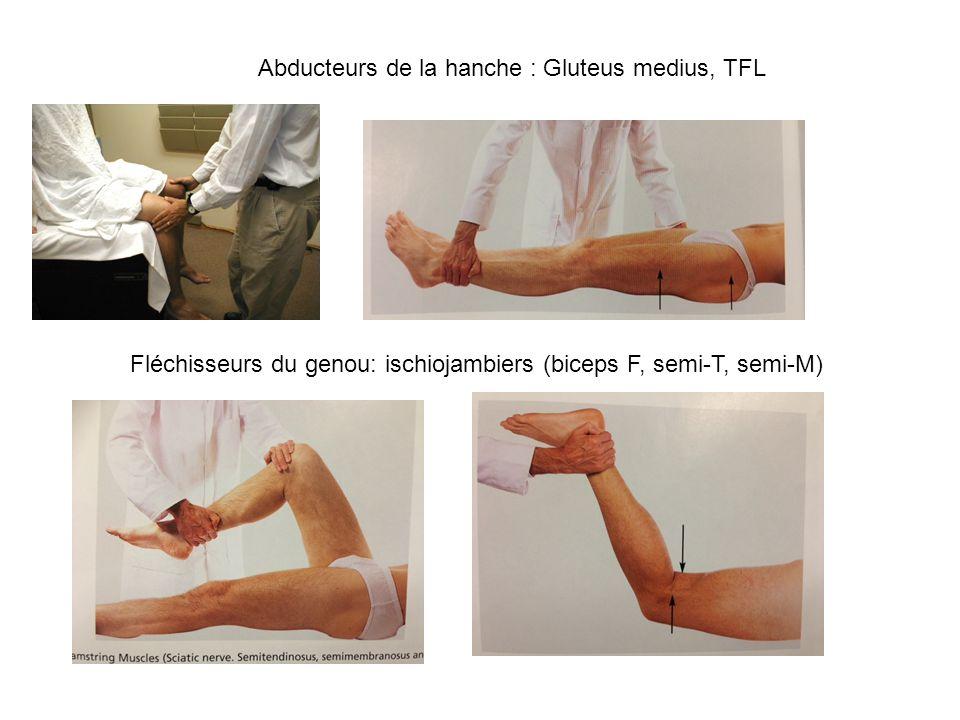 Abducteurs de la hanche : Gluteus medius, TFL Fléchisseurs du genou: ischiojambiers (biceps F, semi-T, semi-M)