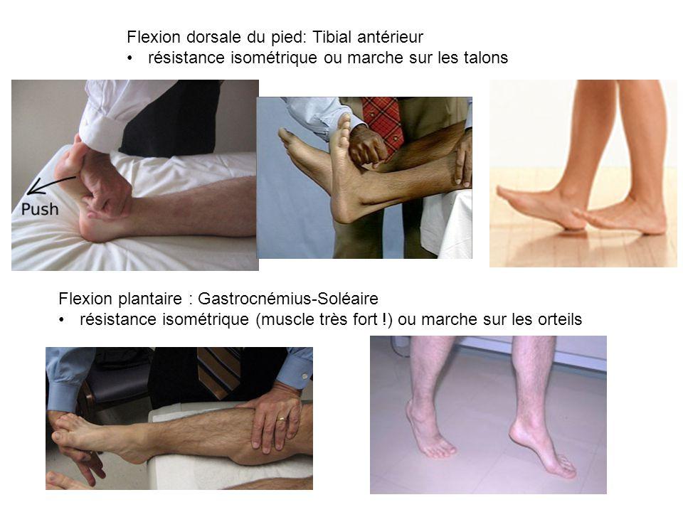 Flexion dorsale du pied: Tibial antérieur résistance isométrique ou marche sur les talons Flexion plantaire : Gastrocnémius-Soléaire résistance isométrique (muscle très fort !) ou marche sur les orteils