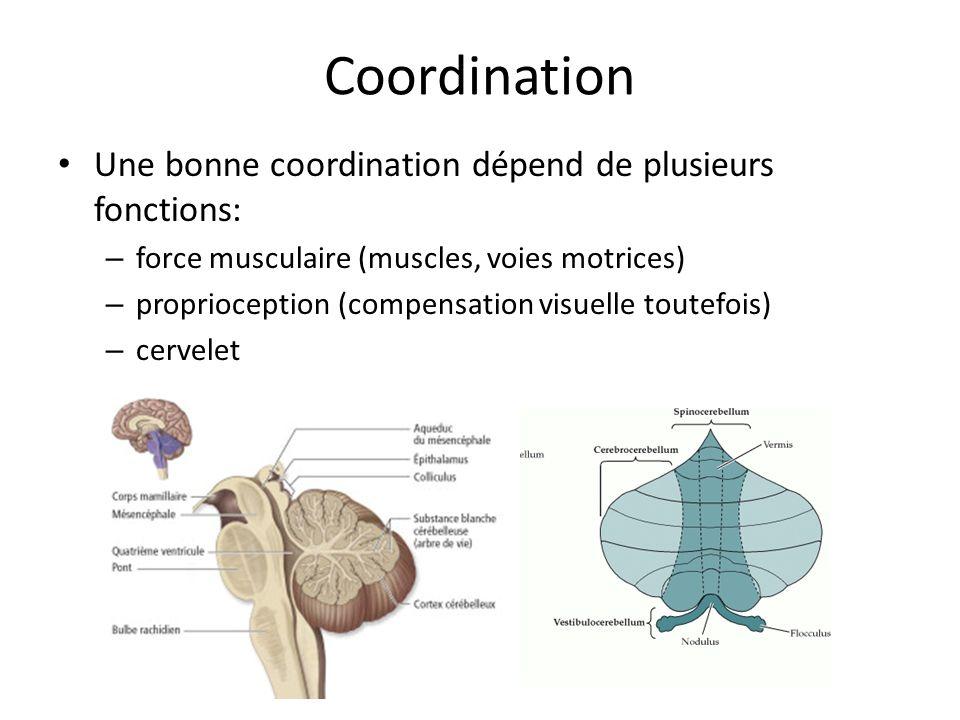 Coordination Une bonne coordination dépend de plusieurs fonctions: – force musculaire (muscles, voies motrices) – proprioception (compensation visuelle toutefois) – cervelet