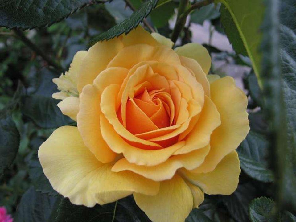 La Tendresse Quel beau sentiment d'affection… S'éprendre sans prétention… Se laisser cajoler par des gestes de douceur… S'amadouer par un regard charm