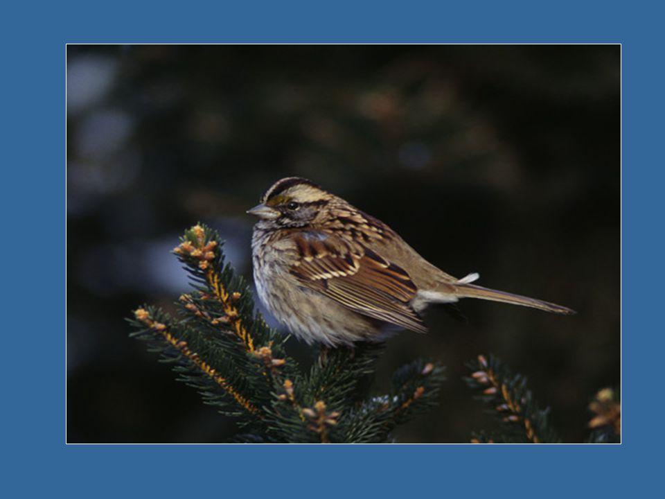 C'est d'entendre le chant mélodieux Des oiseaux Qui exprime leur joie pour ce Jour nouveau.