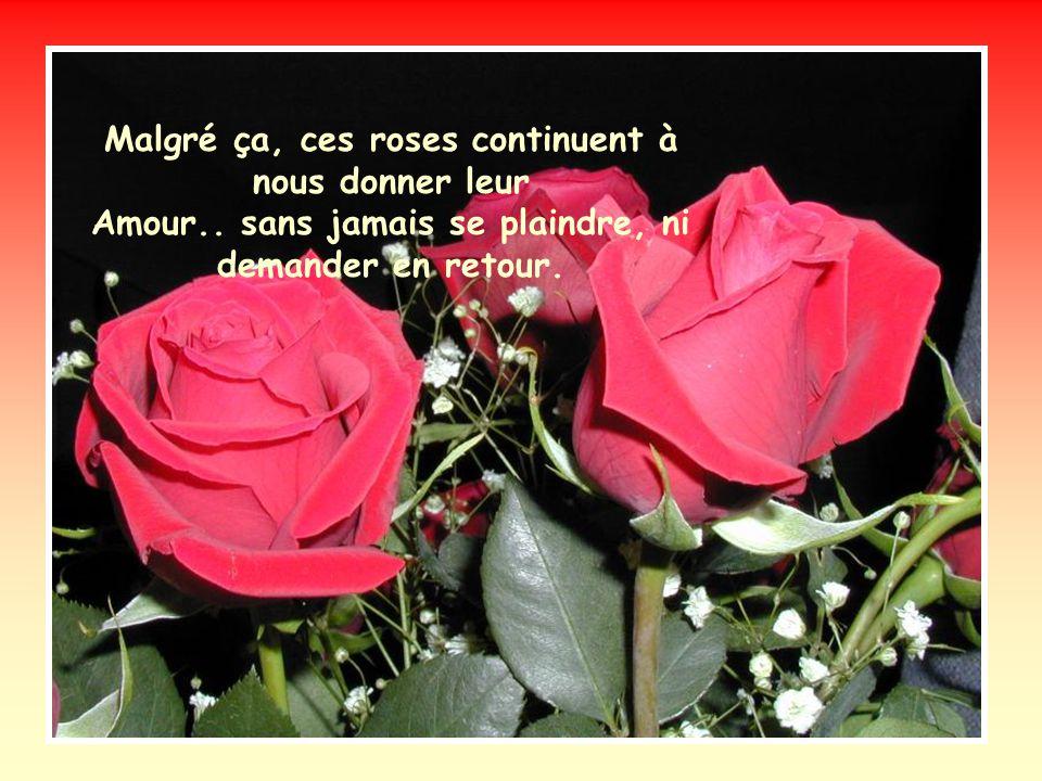 Tiens, vois-tu la tendresse dans ce couple de roses ? Vois comme elles sont fragiles et si belles, et bien Des gens les coupent, les maltraitent, les