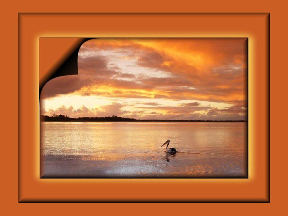 Dans vos rêveries, vous reprendrez goût à la vie… Vous vous promènerez librement sur les nuages… Retrouverez la grande vallée des cieux… Vous vieillirez doucement sans jamais dire Adieu… Une paix divine caressera délicieusement vos réflexions… Vous vous imprégnerez de la douceur de vos émotions…