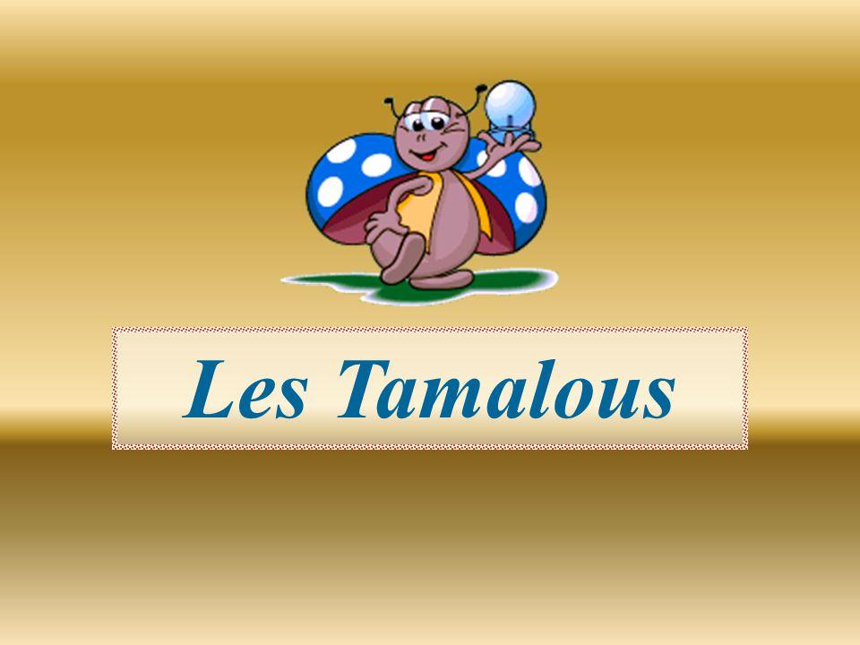 Les Tamalous