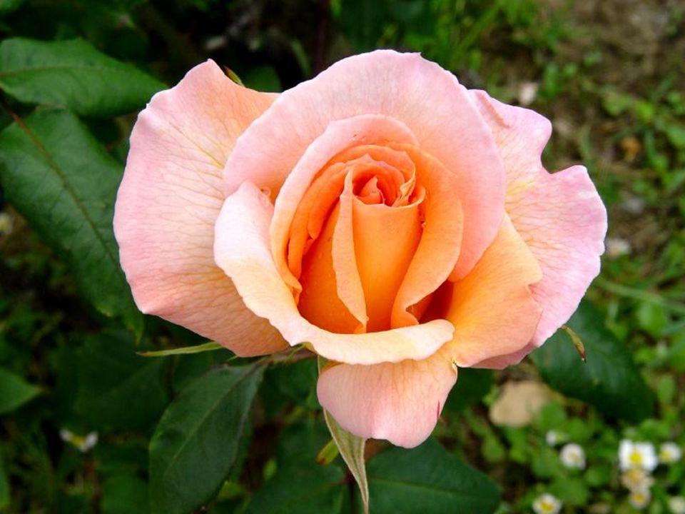 Toute votre vie…vous rêvez sans arrêt À l'Amour impossible… À l'Amitié inaccessible… À La visite de gens que vous aimez… À des espoirs et des joies in