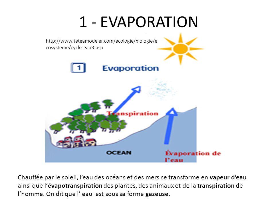 1 - EVAPORATION Chauffée par le soleil, leau des océans et des mers se transforme en vapeur deau ainsi que lévapotranspiration des plantes, des animau