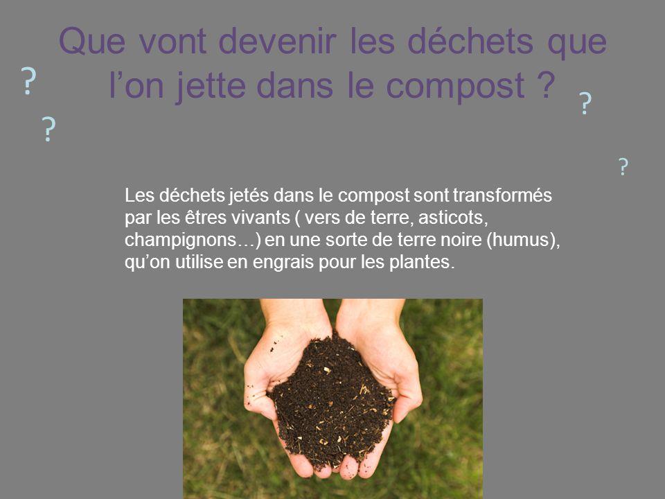 Que vont devenir les déchets que lon jette dans le compost ? ? ? ? ? Les déchets jetés dans le compost sont transformés par les êtres vivants ( vers d