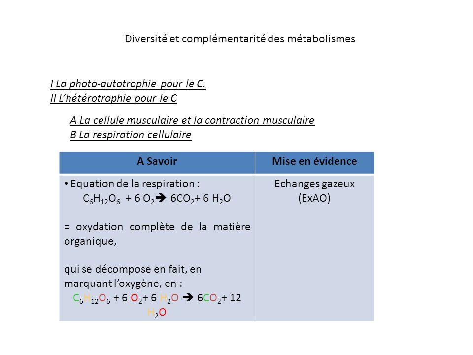 Diversité et complémentarité des métabolismes I La photo-autotrophie pour le C.