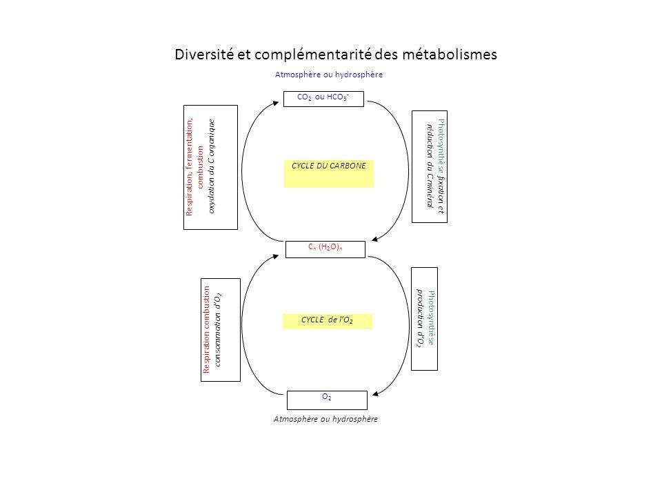 Diversité et complémentarité des métabolismes CO 2 ou HCO 3 - C n (H 2 O) n O2O2 Photosynthèse production dO 2 Respiration combustion consommation dO 2 Photosynthèse fixation et réduction du C minéral Respiration, fermentation, combustion oxydation du C organique Atmosphère ou hydrosphère CYCLE de lO 2 CYCLE DU CARBONE