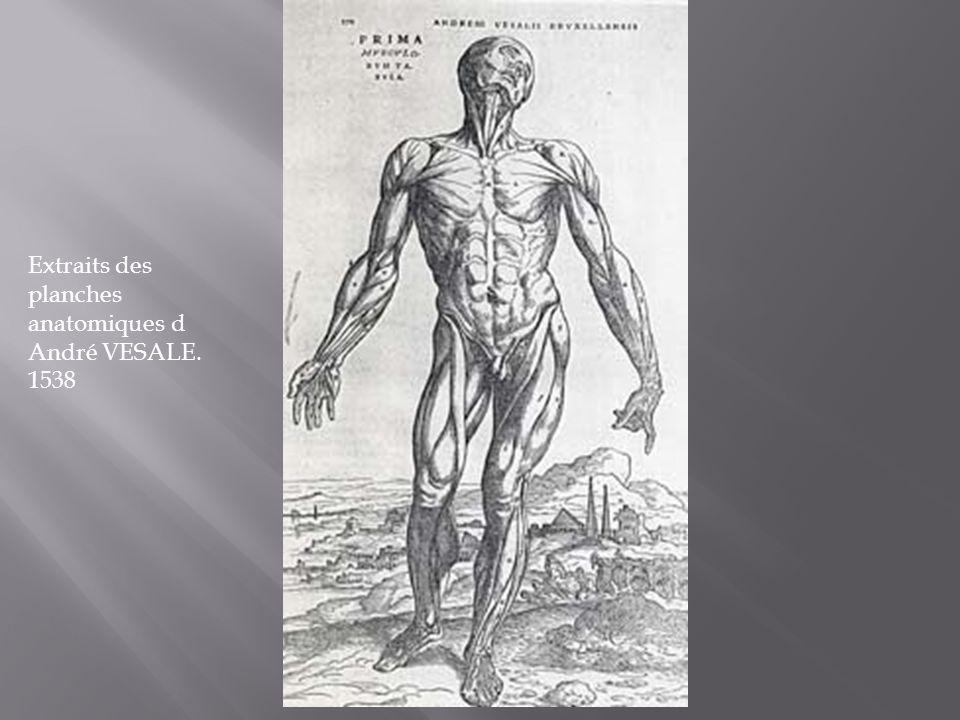 Extraits des planches anatomiques d André VESALE. 1538