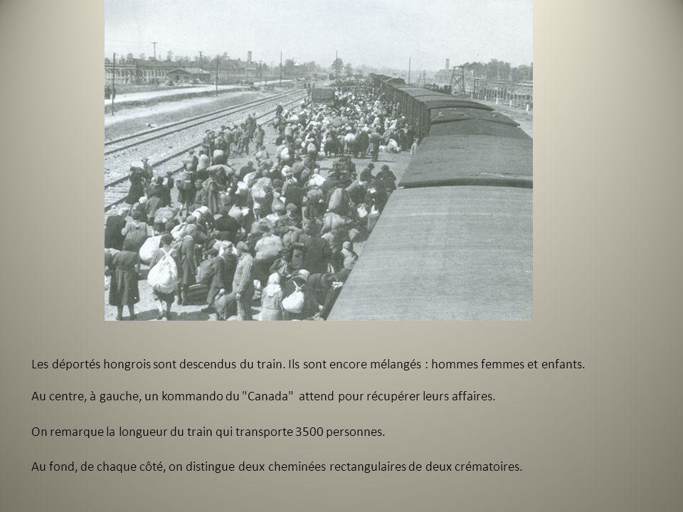 Les déportés hongrois sont descendus du train. Ils sont encore mélangés : hommes femmes et enfants. Au centre, à gauche, un kommando du