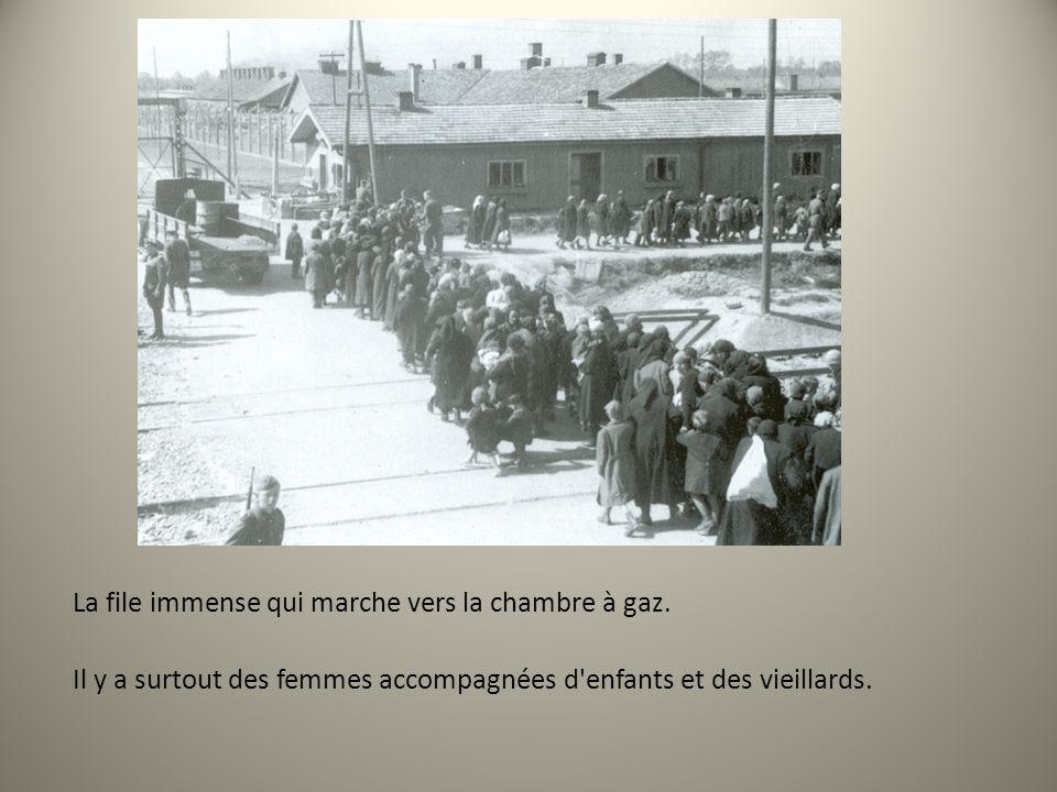 La file immense qui marche vers la chambre à gaz. Il y a surtout des femmes accompagnées d'enfants et des vieillards.