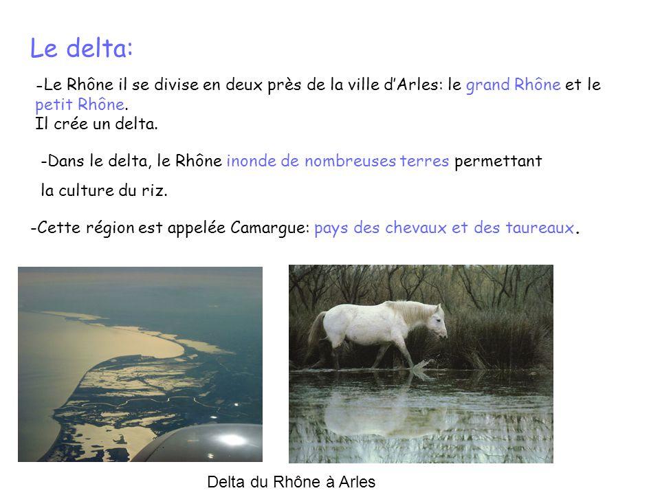 Le delta: -Cette région est appelée Camargue: pays des chevaux et des taureaux. - Le Rhône il se divise en deux près de la ville dArles: le grand Rhôn