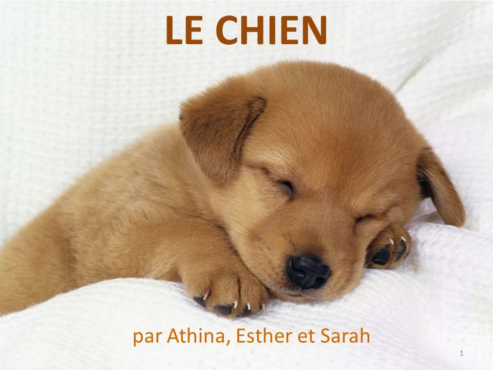 LE CHIEN par Athina, Esther et Sarah 1