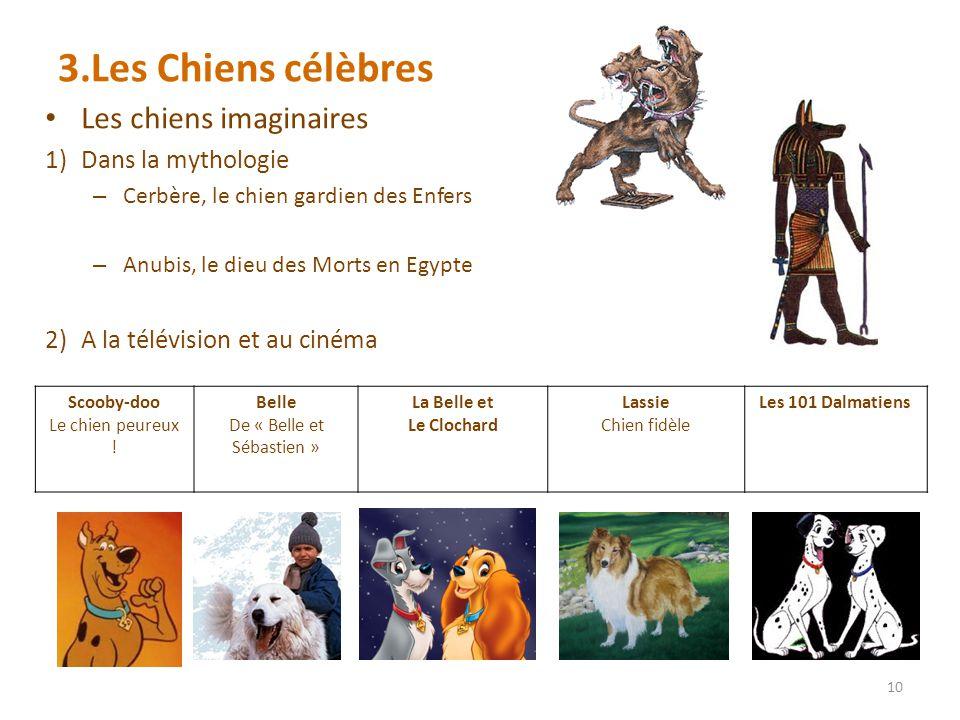 3.Les Chiens célèbres Les chiens imaginaires 1)Dans la mythologie – Cerbère, le chien gardien des Enfers – Anubis, le dieu des Morts en Egypte 2)A la télévision et au cinéma 10 Scooby-doo Le chien peureux .
