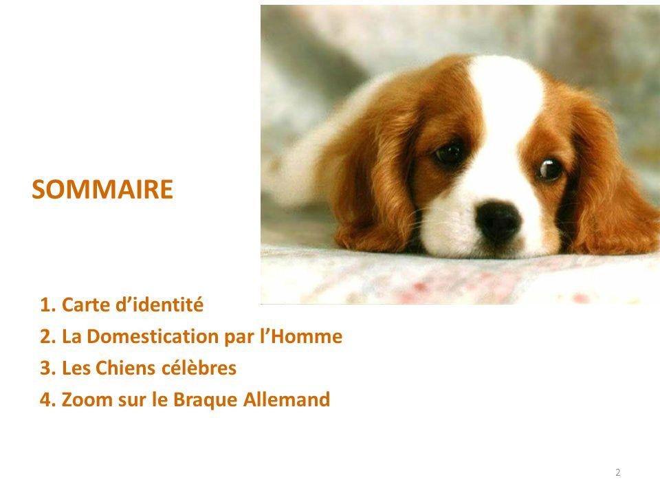SOMMAIRE 1.Carte didentité 2. La Domestication par lHomme 3.