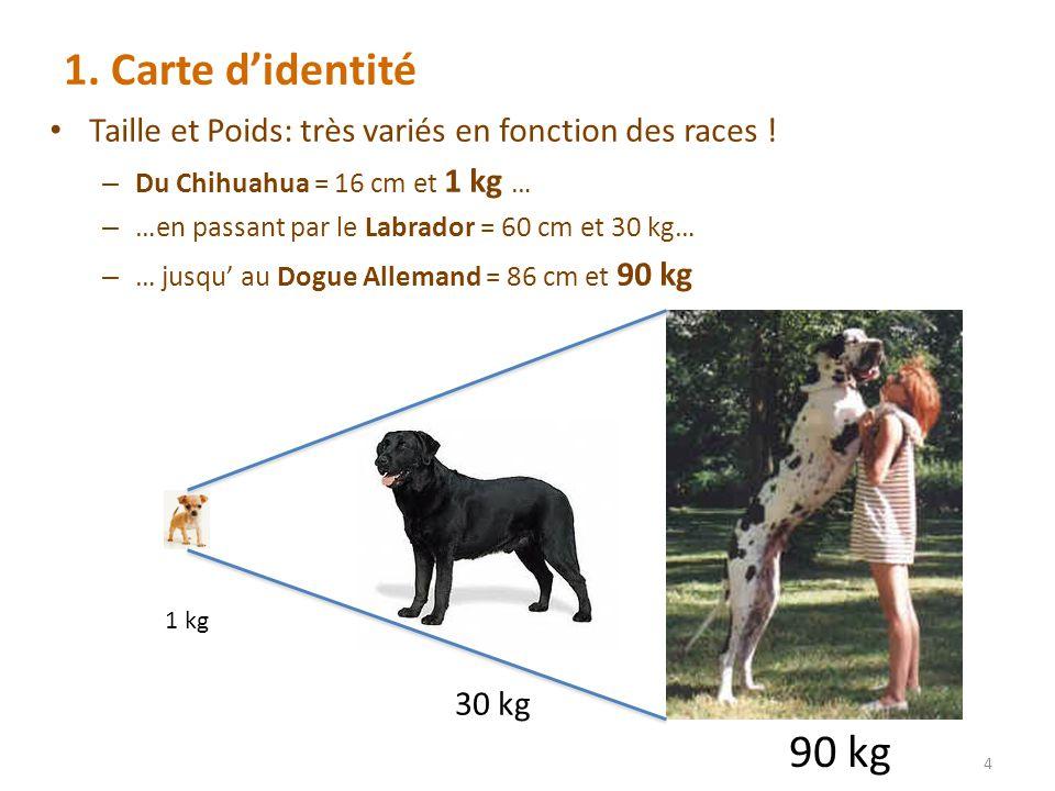 1.Carte didentité Taille et Poids: très variés en fonction des races .