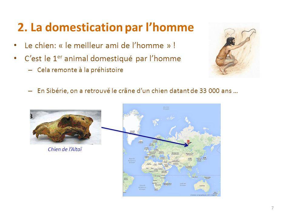 2.La domestication par lhomme Le chien: « le meilleur ami de lhomme » .