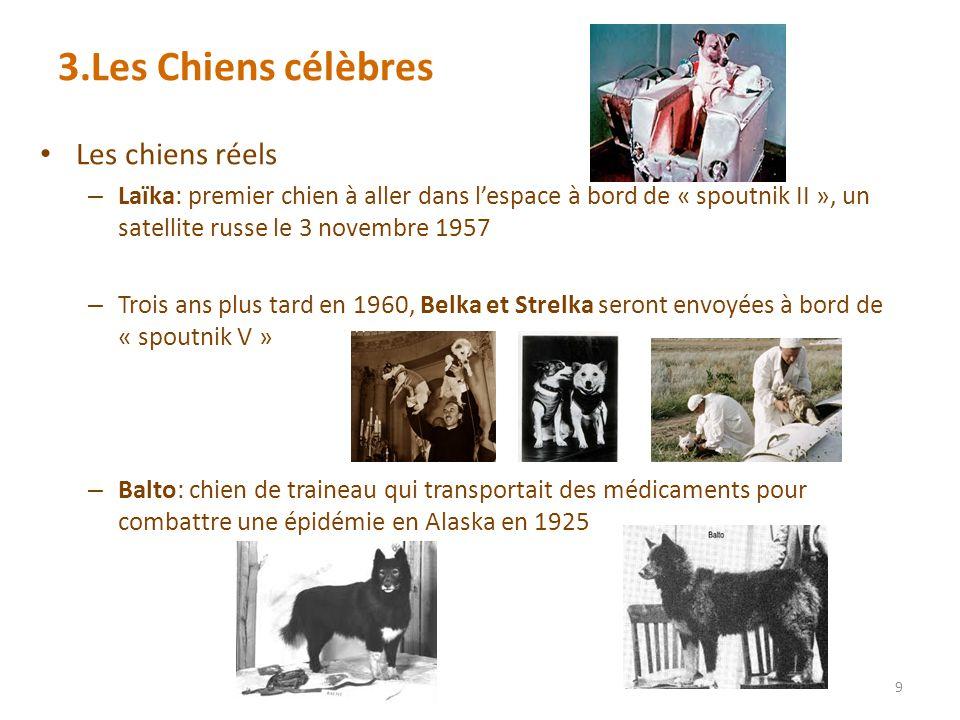 3.Les Chiens célèbres Les chiens réels – Laïka: premier chien à aller dans lespace à bord de « spoutnik II », un satellite russe le 3 novembre 1957 – Trois ans plus tard en 1960, Belka et Strelka seront envoyées à bord de « spoutnik V » – Balto: chien de traineau qui transportait des médicaments pour combattre une épidémie en Alaska en 1925 9