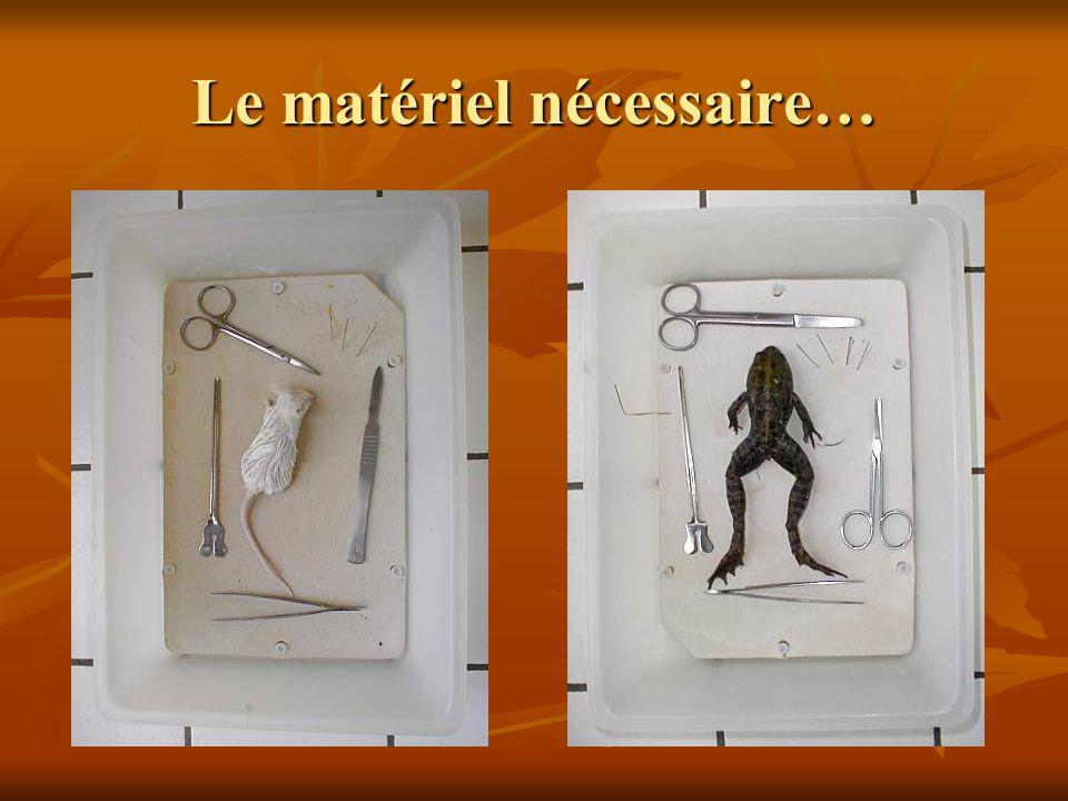 Le matériel nécessaire…