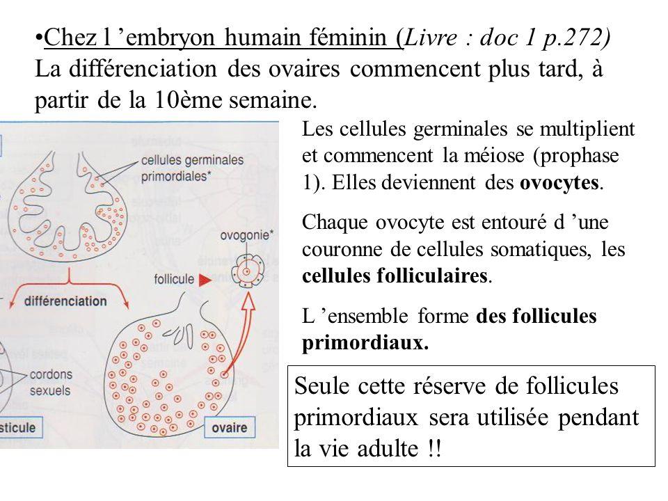 Chez l embryon humain féminin (Livre : doc 1 p.272) La différenciation des ovaires commencent plus tard, à partir de la 10ème semaine. Les cellules ge
