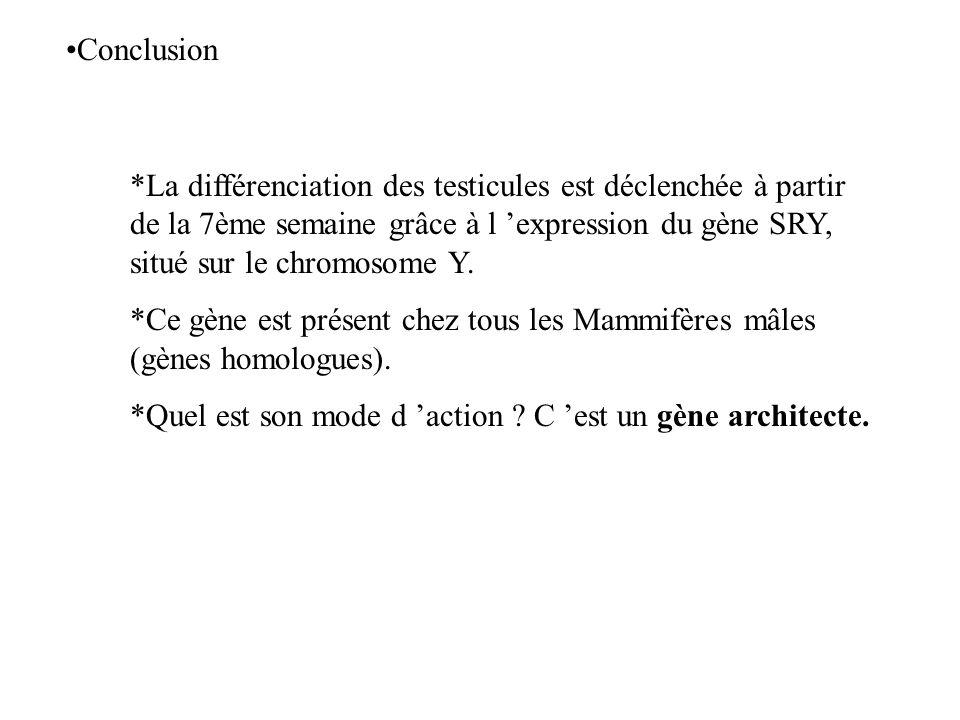 Conclusion *La différenciation des testicules est déclenchée à partir de la 7ème semaine grâce à l expression du gène SRY, situé sur le chromosome Y.