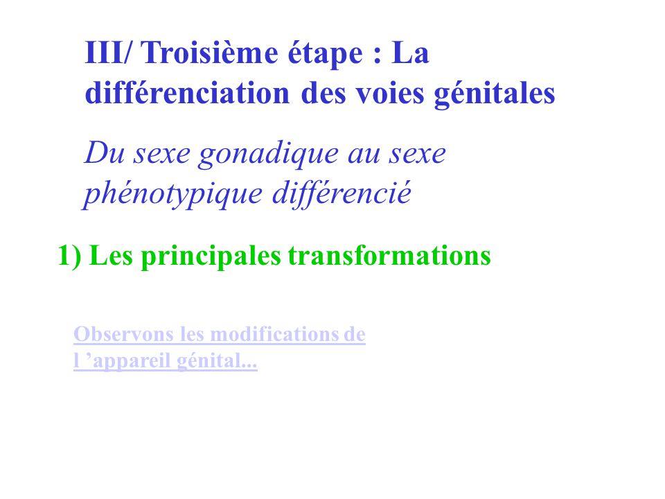 III/ Troisième étape : La différenciation des voies génitales Du sexe gonadique au sexe phénotypique différencié 1) Les principales transformations Ob