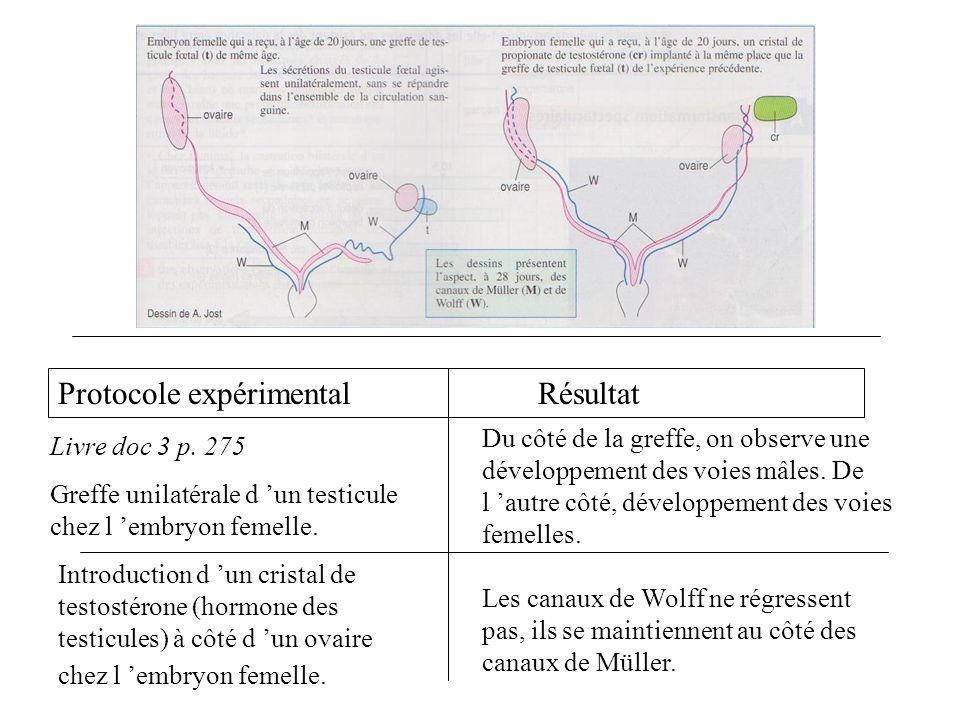 Protocole expérimentalRésultat Livre doc 3 p. 275 Greffe unilatérale d un testicule chez l embryon femelle. Du côté de la greffe, on observe une dével