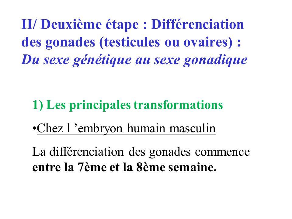 II/ Deuxième étape : Différenciation des gonades (testicules ou ovaires) : Du sexe génétique au sexe gonadique 1) Les principales transformations Chez