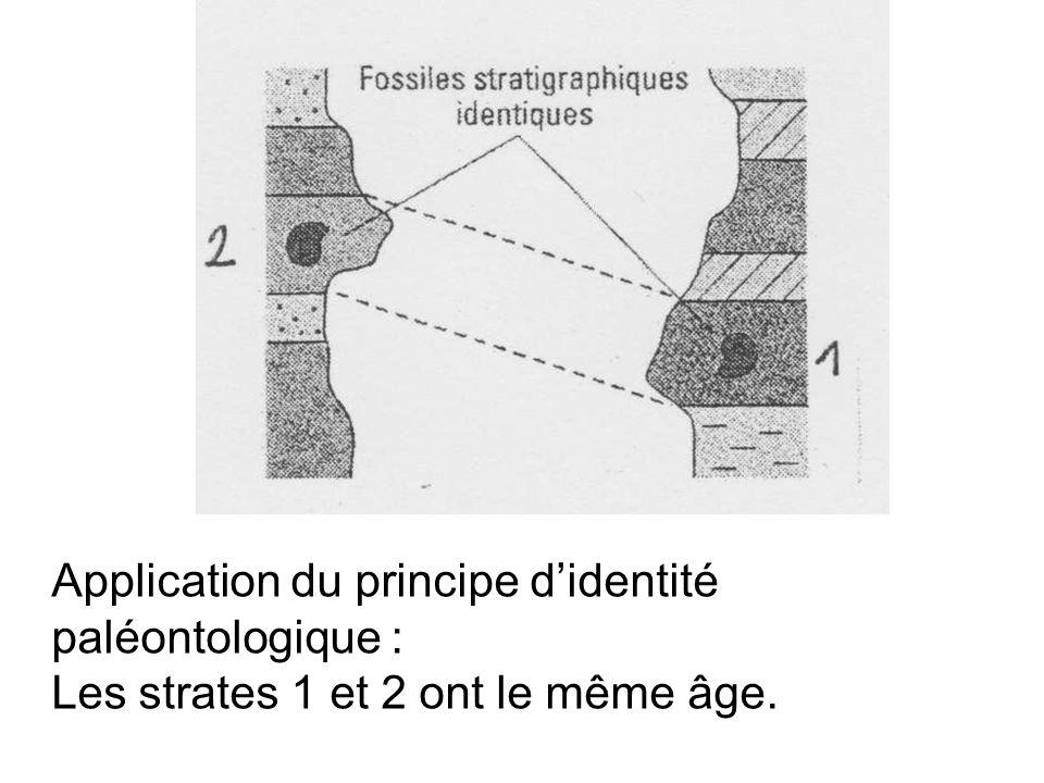 Application du principe didentité paléontologique : Les strates 1 et 2 ont le même âge.
