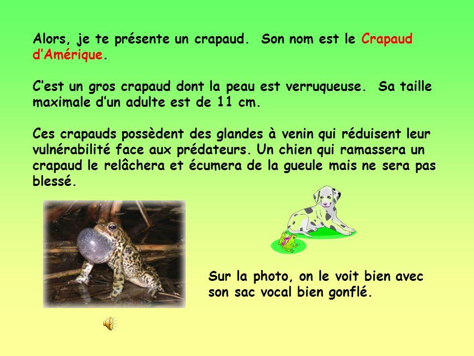 Le mot « grenouille » englobe toutes les espèces de grenouilles et de crapauds. Donc, tous les crapauds sont des grenouilles. Mais le contraire nest p