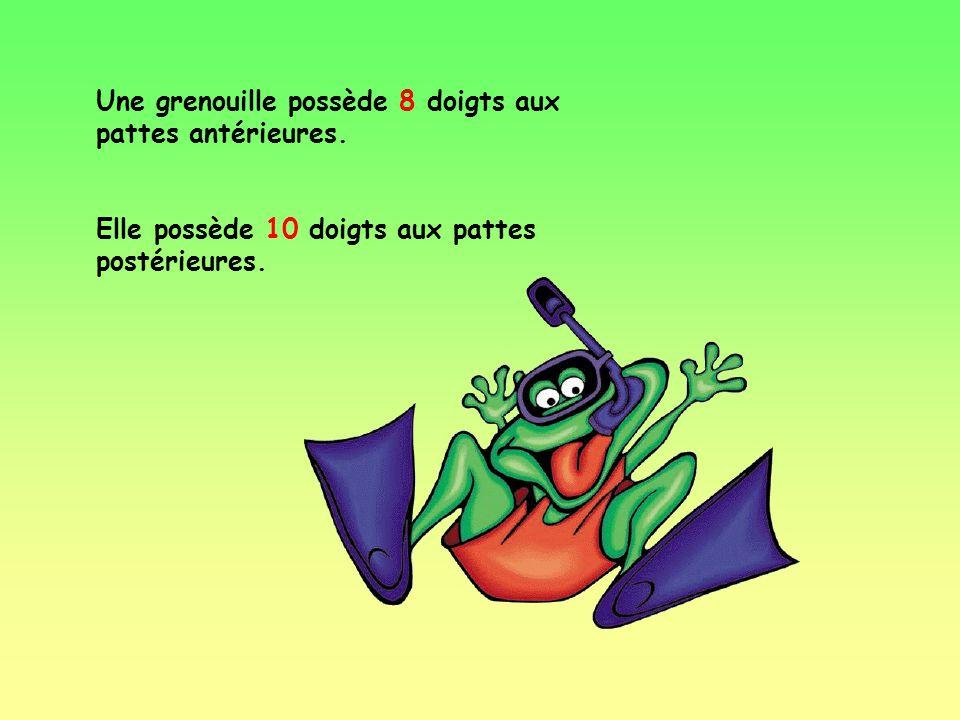 Comme tous les amphibiens, l'activité des crapauds et des grenouilles varie en fonction de la température. C'est ainsi qu'à l'approche de l'hiver, les
