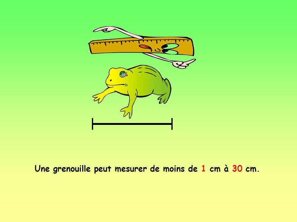 Une grenouille peut peser jusquà 3,3 kg ou 7 livres. Un litre deau pèse environ 1 kg. Donc, notre grenouille pourrait peser un peu plus que 3 litres d